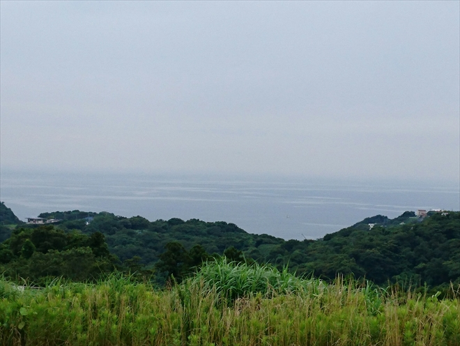 横須賀市|屋根に鳥が巣を作るというお問合せが増えています