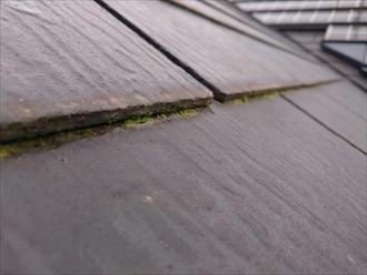 横浜市旭区で雨漏りの原因調査をおこないました