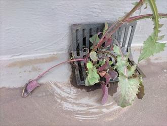 屋上防水は過去の工事に問題ありです|横浜市保土ヶ谷区