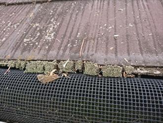 落葉除けネットが設置してあるが軒先には多くの苔や藻の汚れが発生