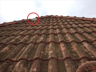 屋根に上がる直前にふと見上げてみると、どうやら怪しい箇所が見つかりました