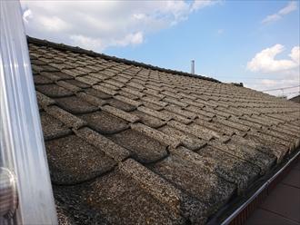 梯子が架けられる位置がなかなかなくようやくかけた所、屋根はコンクリート瓦でした