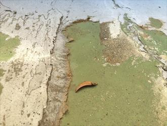 すでに剥がれてしまっているウレタン防水の表面