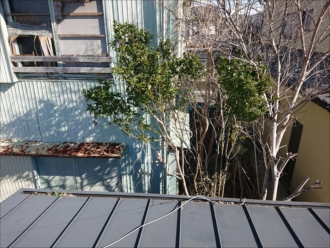 雨樋から視線を上げるとそこには今は空き家になっている敷地内に木々が多くありました