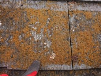 大和市つきみ野にて長年塗装をしていない築30年経過したアパート屋根調査、室内に雨染みが出てきたら塗装ではなく葺き替え工事が必要です