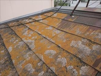 日当たりがいい南側の屋根の方が黄色くなっていました。