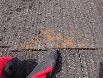使用年数の長いスレートは苔が付着しやすい