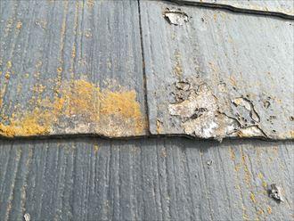 過去に塗装をしたときの塗膜が剥がれ出している