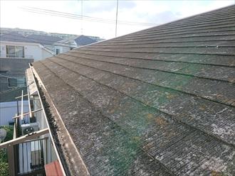 屋根にあがると、苔やカビで覆いつくされたスレートの様子