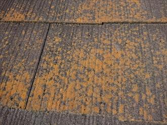 苔の繁殖が多い時は屋根が本来の性能をうしなっている証拠