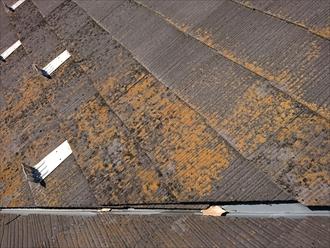 屋根のどこを見ても目に入る苔