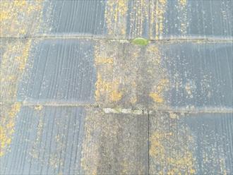 コケの繁殖、花粉の付着