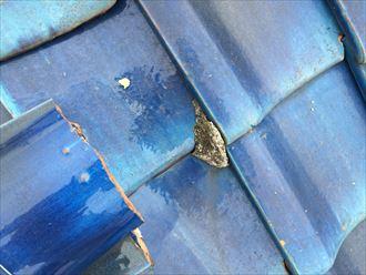 瓦屋根に使用されている詰め物が剥がれている