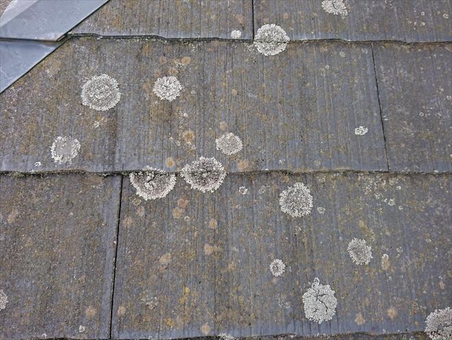 化粧スレートに苔やカビが多く見つかったら屋根のメンテナンスが必要です