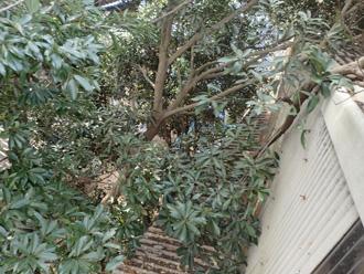 平塚市小鍋島 工場の屋根に枝葉が当たっている
