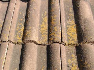 苔や藻が付着したモニエル瓦