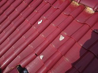 屋根の上に何やら白い塊が落ちていました
