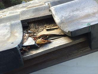 海老名市社家で瓦の破損、出てきた中身は傷んでおりました