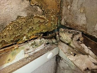 軽鉄に固定されている石膏ボードも雨水を吸ってボロボロで漏電の心配もございました