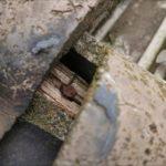 下地が腐食している下屋根