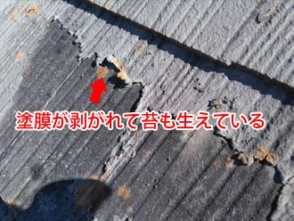 コロニアル屋根 塗膜が剥がれて苔が生えている