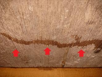 特に雨が降っているわけではありませんが、野地板を見ると染みている箇所が確認できます