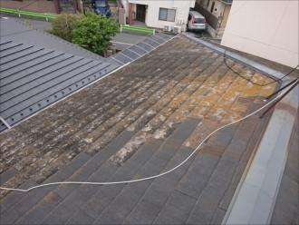 屋根に上がると棟付近が黄色に染まっており雨漏りしている可能性がありました
