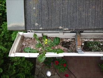 軒樋内にヘドロやゴミが溜まり詰まってしまい雨水が正常に流れなくなっている
