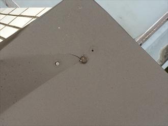 マンション屋上の板金笠木を固定する釘が抜けている
