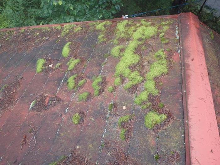 屋根に生えた苔は悪影響を与える