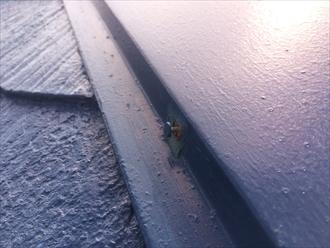 棟板金を固定している釘があちこちで抜け始めている