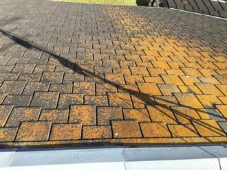 屋根に苔が発生している