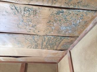 雨漏りでカビだらけになった天井