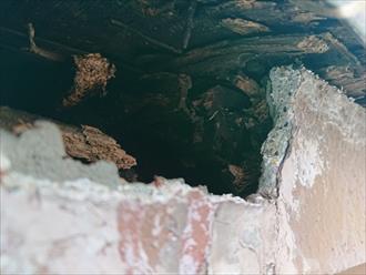 穴から中を確認すると木が腐っていました