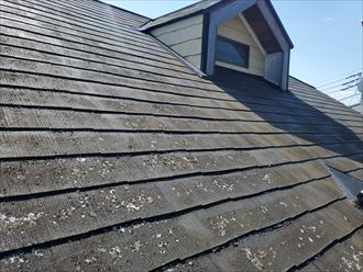 屋根材に付着した苔・藻