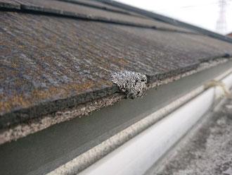スレート屋根に繁殖したカビ