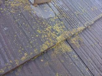 横浜市旭区本宿町にて離れの屋根調査、経年劣化による下地の劣化により棟板金が飛散してしまいました