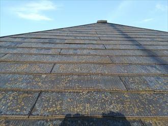 表面に苔や藻の繁殖が目立つスレート屋根