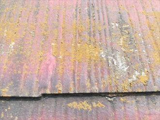 塗膜が劣化して苔や藻が繁殖したスレート