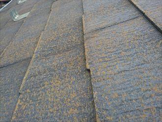 表面に苔が繁殖したスレート屋根