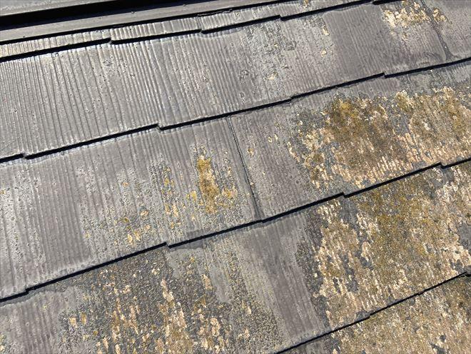 塗装が剝がれた屋根に苔の繁殖