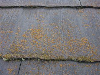 苔の繁殖したスレートの表面