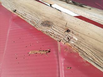 飛散した棟板金の傷んだ貫板