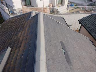 日当たりの悪い屋根面に繁殖した苔