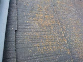 苔の発生が目立ち、塗膜の劣化したスレート