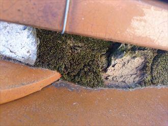 漆喰の剥がれた箇所に苔が繁殖した瓦屋根の棟