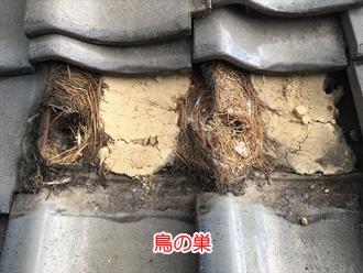 瓦の下に鳥の巣が作られている