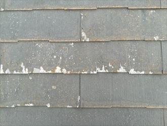 層間剥離が発生し、表面が剥がれたパミール