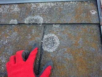 カビが繁殖し汚れの目立つスレート屋根