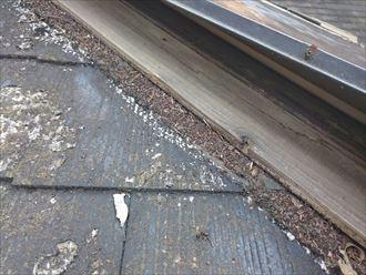 貫板に腐食が見られ、固定力の弱まった棟板金